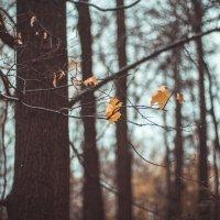 Поздняя осень :: Ната Анохина