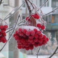 Внезапная зима... :: Елена Байдакова