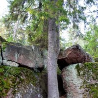 И на камнях растут деревья... :: Надежда ---