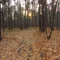 Октябрьское солнце - IMG_3894 :: Андрей Лукьянов
