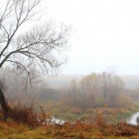 Души туманные границы... :: Лесо-Вед (Баранов)