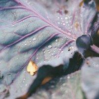 Осень :: Марта Май