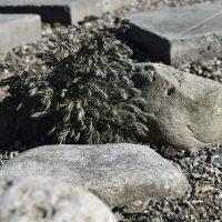 в саду камней :: Мария Климова