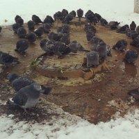 Птички мерзнут :: Наталья Дмитриева