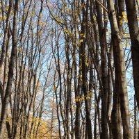 Осенний парк :: Алексей Михалев