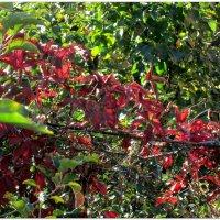 Осеннее утро в саду... :: Тамара (st.tamara)