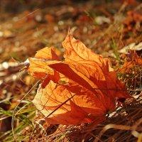 На ветру.Листья улетают :: Лидия (naum.lidiya)