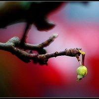 Осень :: Айвар Вилюмсон