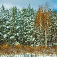 Рыжая зима :: Ярослав Афанасьев