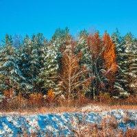 Осенняя зима :: Ярослав Афанасьев