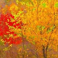 Золотая осень :: Вера Бережная