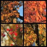 Осень (коллаж) :: Angelika Faustova