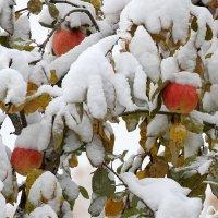 первый снег. :: Анатолий Мартынов