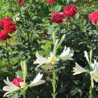 Июнь,розы и лилии... :: Тамара (st.tamara)