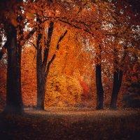 Осенний пейзажик :: Valery Mikhnevich Михневич