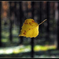 Осенний лист. :: Айвар Вилюмсон