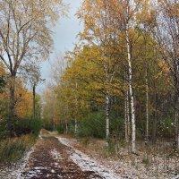 Северодвинск. Осень :: Владимир Шибинский