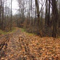 Проход в ноябрь не по пропускам - IMG_3992 :: Андрей Лукьянов