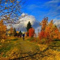золотая  осень :: Ольга Cоломатина
