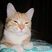 Спи глазок , спи другой ! :: Мила Бовкун