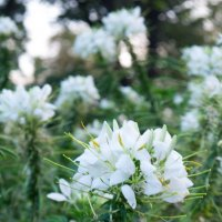 цветок :: Таня Кулешова