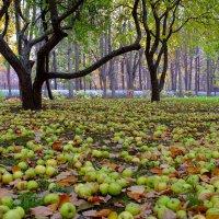 Осень 2 :: Sergey Izotov
