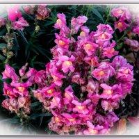 Цветы. :: Александр Лейкум