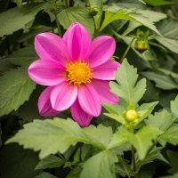 Просто цветочек :: Lidiya Oleandra