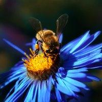Пчелка :: Иван Солонинка