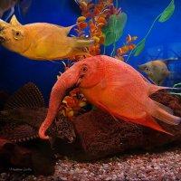 In the aquarium :: Vladdimr SaRa