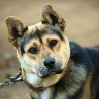 Пёс :: Николай Климанов