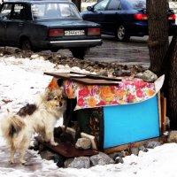 Человеческая забота о бродячем пёсике . :: Мила Бовкун