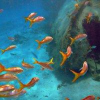 Подводный мир :: Виктория Исполатова