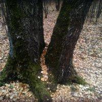В осеннем лесу... :: Ольга Кривых