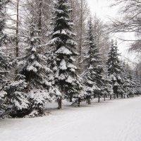 Зима в парке :: Татьяна Ломтева