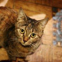 египетской котик смотрит на вас :: Alisa Wonderland