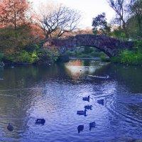 Central Park, New York City. Oct. 2014 :: Виталий Бараковский