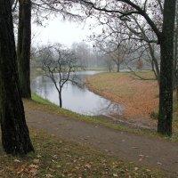 Ноябрь. Всё молчаливей и грустней становится осень... :: ТАТЬЯНА (tatik)