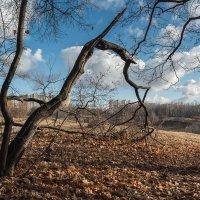 Поздняя осень :: Владимир Лисаев
