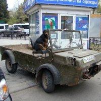 Сигнализация не нужна... :: Александр С