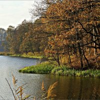 Осень... :: Валерия Комова