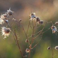 Осенний цветок 2 :: Андрей Зайцев