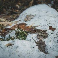 Уже снег лежит :: Света Кондрашова