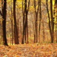 Осенний лес... :: *MIRA* **