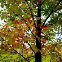 Краски осени :: Милагрос Экспосито