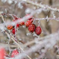 Зима стучится в двери 1 :: Наталья Макарова