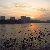 Ноябрь-красавец IMG_4477 :: Андрей Лукьянов
