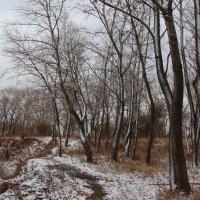 Первый снег :: Dr. Olver  ( ОлегЪ )