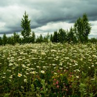 запахи лета :: Ирина Кулагина