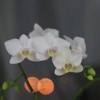 Цвет зимы :: Lim .